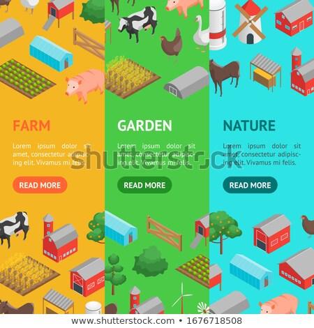természetes · gazdálkodás · izometrikus · függőleges · szórólapok · állat - stock fotó © studioworkstock