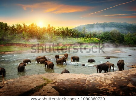 Elephant in the green jungle Stock photo © Ustofre9