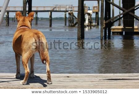 boys on dock in marsh stock photo © iofoto