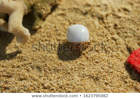 Bored Little Hermit Crab Stock photo © cthoman