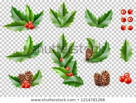 christmas banners set with holly berry transparent background stock photo © cammep