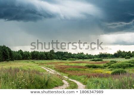 Route savane domaine illustration paysage fond Photo stock © colematt