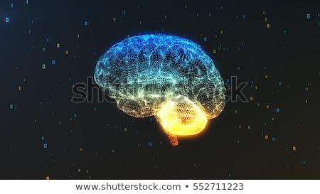Cérebro humano abstrato luz azul luz cinza brilho Foto stock © Tefi