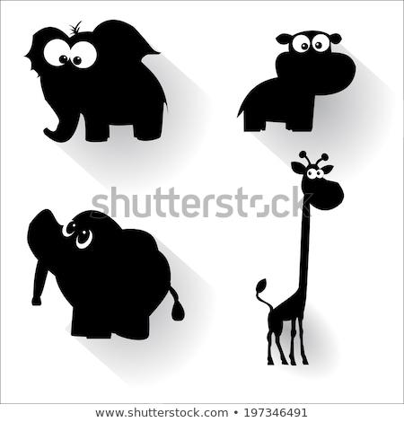 Hayvan zürafa oturma örnek arka plan Stok fotoğraf © colematt