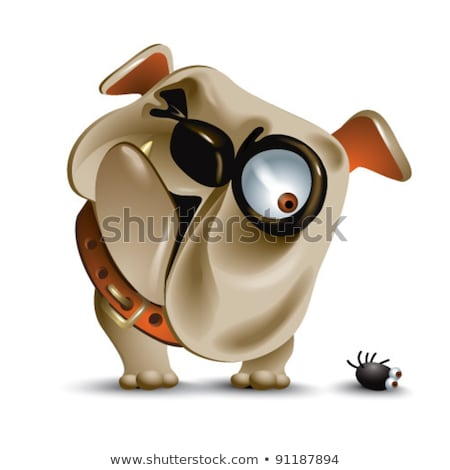 head of curious brown and white english bulldog looking down Stock photo © feedough