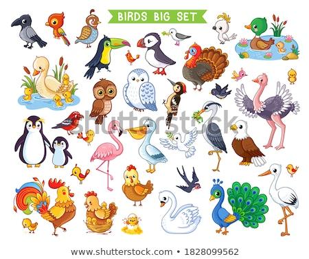 Foto stock: Papagaio · ovo · ilustração · flores · natureza · paisagem