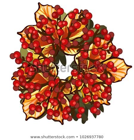 装飾的な 花輪 葉 栗 赤 ストックフォト © Lady-Luck