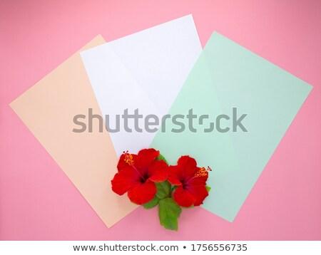 Kırmızı ebegümeci çiçekler farklı renk Stok fotoğraf © oksanika