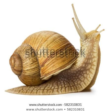 caracol · natureza · viajar · concha · movimento · direção - foto stock © chrisroll