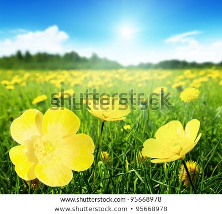 Field of spring flowers and perfect sunny day Stock photo © Zhukow