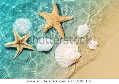 conchas · praia · poucos · praia · água · natureza - foto stock © tannjuska