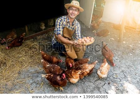 Verzamelen eieren kind jongen kid Stockfoto © soupstock