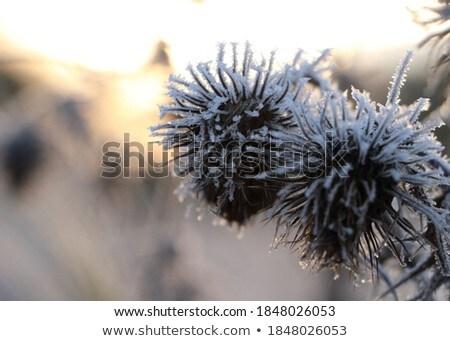 морозный зима мороз Blue Sky природы Сток-фото © mady70