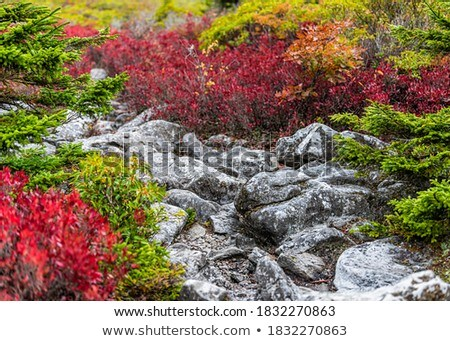 Stock photo: Autumn landscape with stone and bush blueberries
