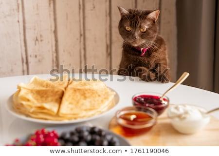 macska · szem · haj · piros · állat · néz - stock fotó © pterwort