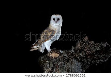 Sowa polowanie noc ilustracja drzewo streszczenie Zdjęcia stock © bluering
