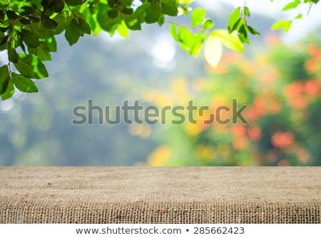 tuin · houten · tafel · groene · bokeh · gras - stockfoto © karandaev