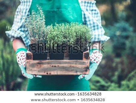 女性 手 手袋 小さな 木製 ストックフォト © dashapetrenko