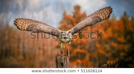 Great Horned Owl  Stock photo © brm1949