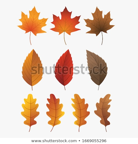 Brown leaves Stock photo © bluering