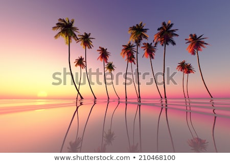zonsondergang · Cuba · kust · eiland · caribbean · zee - stockfoto © hofmeester