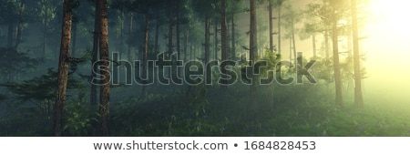 Pine Forest Misty background Stock photo © vichie81