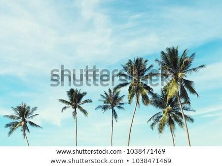 Palmiye ağaçları mavi gökyüzü yeşil beyaz bulutlar plaj Stok fotoğraf © vapi