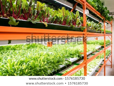 Verde piantine altro verdura crescita Foto d'archivio © pressmaster