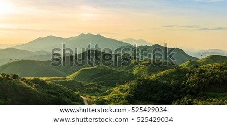 зеленый · холме · деревья · соснового · мнение · небольшой - Сток-фото © mycola