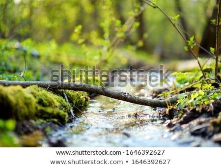 природного ручей выстрел свежие улице Сток-фото © AlphaBaby