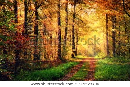 napsütés · vidéki · Németország · nap · természet · farm - stock fotó © meinzahn