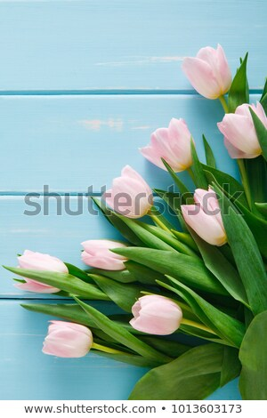 Pink Tulips on a blue background with copyspace Stock photo © Zerbor