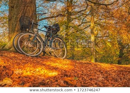 秋 デンマーク ツリー 森林 葉 ストックフォト © jeancliclac