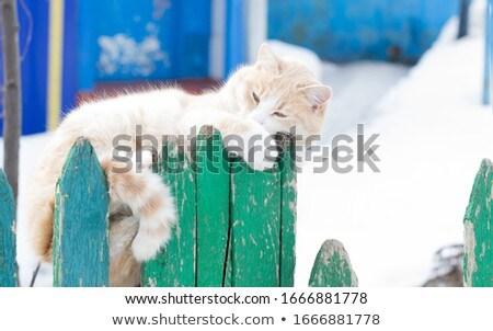 cute · kat · bloem · zomer · groene · tijger - stockfoto © meinzahn