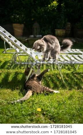 two sun lounger side by side in the garden Stock photo © meinzahn