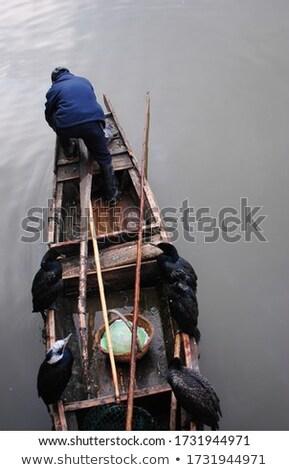 Osprey ready for fishing Stock photo © bbbar