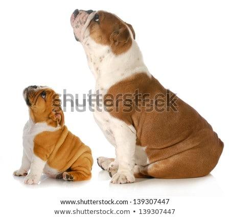zijaanzicht · zwarte · puppy · hond · liefde · triest - stockfoto © feedough