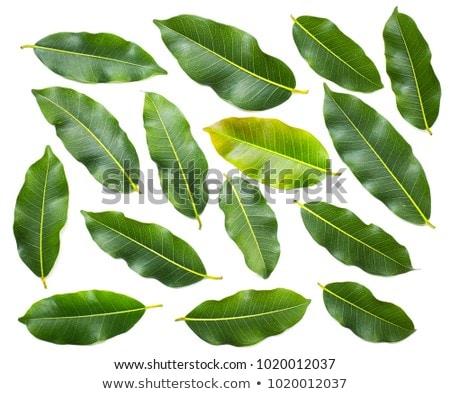 assorted green toned raw organic vegetables on white background avocado cabbage broccoli caulifl stock photo © denismart