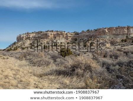 Lang gras woestijn bergen blauwe hemel drogen Stockfoto © pixelsnap