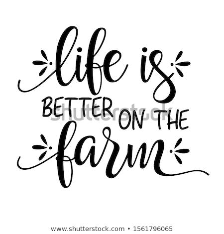 ovejas · cordero · granja · granero · agricultura · jóvenes - foto stock © craig