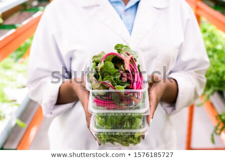 Fresh beet leaves in plastic container on top of stack held by young agronomist Stock photo © pressmaster