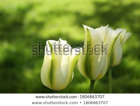 Stock photo: spring in green