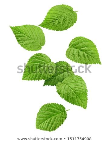 Rijp framboos groen blad geïsoleerd witte voedsel Stockfoto © brulove