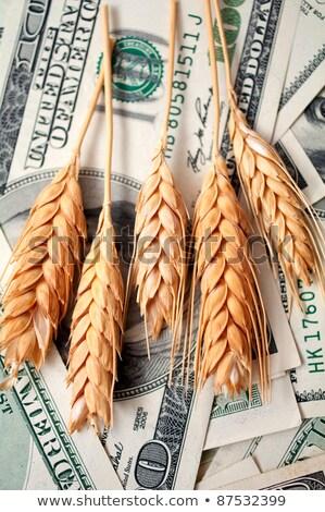 golden spikes with dollar bills Stock photo © illustrart