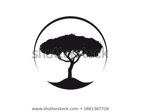 Steen park zomer dag boom Stockfoto © Alex9500
