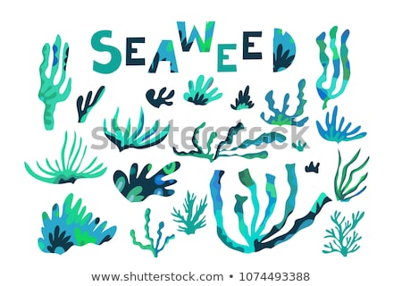 Tropical Leaves And Seaweeds Poster Set Vector Stock photo © pikepicture