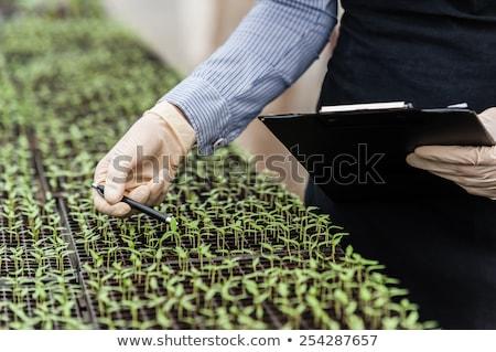 Woman examining green plant in laboratory Stock photo © dashapetrenko