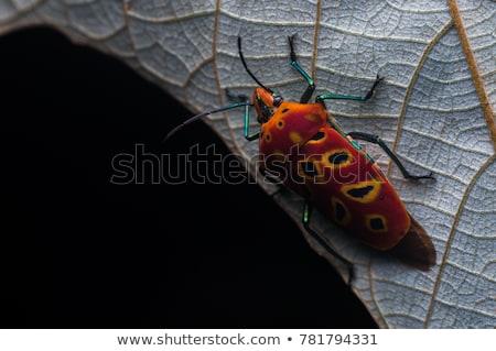 オレンジ · カブトムシ · 緑 · 自然 · 庭園 · 春 - ストックフォト © sweetcrisis