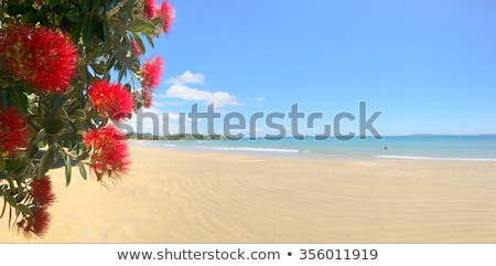 Belo praia Nova Zelândia costa ponta Foto stock © Hofmeester