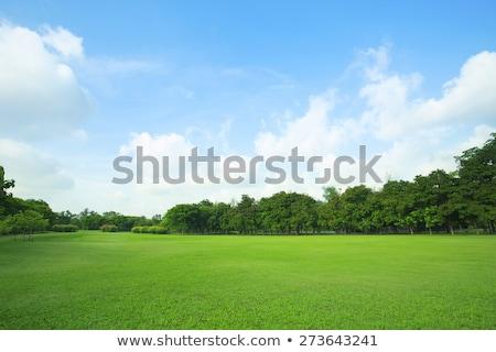 felhős · égbolt · fű · természet · tájkép · szépség - stock fotó © ongap